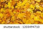 background group autumn orange... | Shutterstock . vector #1203494710