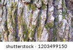 tree bark texture background. | Shutterstock . vector #1203499150