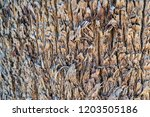 abstract corrugated wooden... | Shutterstock . vector #1203505186