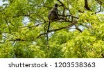 monkey sitting on the tree | Shutterstock . vector #1203538363