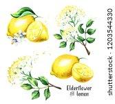 elder flower and lemon set.... | Shutterstock . vector #1203544330