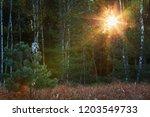 boreal owl  aegolius funereus ... | Shutterstock . vector #1203549733