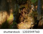 close up boreal owl  aegolius... | Shutterstock . vector #1203549760
