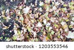 dry autumn leaves background | Shutterstock . vector #1203553546