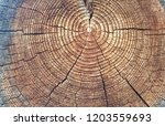 cross section of tree trunk... | Shutterstock . vector #1203559693