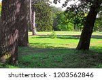 "park ""oleksandriya"" in bila... | Shutterstock . vector #1203562846"