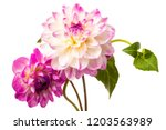 Beautiful Colorful Arrangement...
