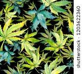 green cannabis leaf. leaf plant ... | Shutterstock . vector #1203622360