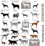 collection of different breeds... | Shutterstock .eps vector #1203624130