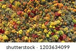 aerial. autumn forest view from ... | Shutterstock . vector #1203634099