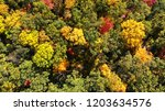 aerial. autumn forest foliage.... | Shutterstock . vector #1203634576