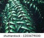 tropical fern leaves | Shutterstock . vector #1203679030