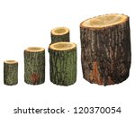 Birch Wooden Logs Isolated On...