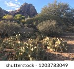 prickly pear field | Shutterstock . vector #1203783049