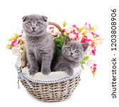 Stock photo one cat stands and the other is sitting in a basket with flowers cats with decorations gray 1203808906