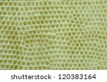 close up snake skin  leather... | Shutterstock . vector #120383164