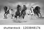 Horses run gallop free in desert dust against storm sky. Black and white - stock photo