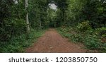 way to go  dirt road is a...   Shutterstock . vector #1203850750