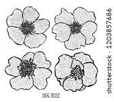 decorative dog rose flowers ... | Shutterstock .eps vector #1203857686