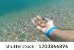 natural sunbeams underwater... | Shutterstock . vector #1203866896