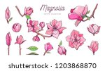 magnolia flower set. vector...   Shutterstock .eps vector #1203868870