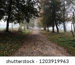 autumn alley. beautiful... | Shutterstock . vector #1203919963