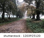 foggy autumn landscape.... | Shutterstock . vector #1203925120