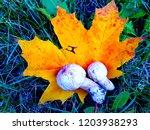 champignon on maple leaf   Shutterstock . vector #1203938293