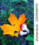 champignon on maple leaf   Shutterstock . vector #1203938470