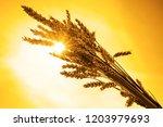 golden reap ears of wheat  on... | Shutterstock . vector #1203979693