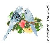 birds budgerigars  home pets ... | Shutterstock .eps vector #1203986260