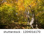 Fantastic Colors Of The Autumn...