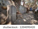 pune  india   jan 31 2018   the ... | Shutterstock . vector #1204090420