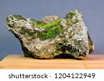 natural stone with moss. bonsai ... | Shutterstock . vector #1204122949