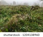 nature background. grass  dew ... | Shutterstock . vector #1204138960