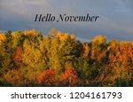 hello november. text. words... | Shutterstock . vector #1204161793