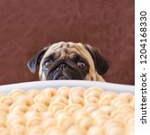 sad pug dog asking food.... | Shutterstock . vector #1204168330