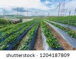 wind turbine farm sitting on... | Shutterstock . vector #1204187809