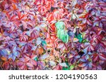 colorful and bright background... | Shutterstock . vector #1204190563
