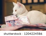 a white cat is played with... | Shutterstock . vector #1204224586
