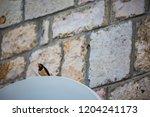 singing european barn swallow... | Shutterstock . vector #1204241173
