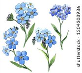 watercolor blue forget me not... | Shutterstock . vector #1204303936
