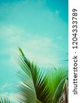 tropical vibes. summer... | Shutterstock . vector #1204333789