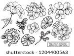 decorative geranium flowers set ... | Shutterstock .eps vector #1204400563