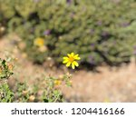 yellow daisy sparse | Shutterstock . vector #1204416166