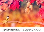 natural background with... | Shutterstock . vector #1204427770