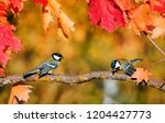natural background with a pair... | Shutterstock . vector #1204427773