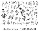 big set of flower decorations...   Shutterstock .eps vector #1204439530