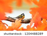 portrait of a beautiful little... | Shutterstock . vector #1204488289