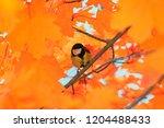 small beautiful bird tit... | Shutterstock . vector #1204488433